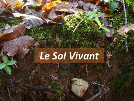 FARAOUN F.-M1.BC.2021-Le sol Vivant. Cours
